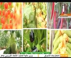 الوطنية للزراعات المحمية: نسعى إلى توفير غذاء صحى آمن للمواطن المصرى