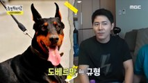 [HOT] Find a dog that looks like you!!, 놀면 뭐하니? 20190817