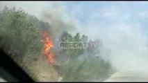 Report TV - Fier zjarr në ullishte, flakët rrezikojnë disa banesa
