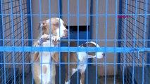 Veteriner Psikolog Tamer Dodurka: Pitbull saldırıyorsa kabahat sahibindedir