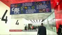 Espèces menacées : 182 pays réunis à Genève contre le trafic d'animaux