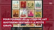 De Khartoum à Paris, l'incroyable destin de Zarafa la girafe !...