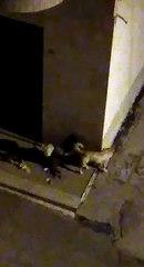 Andria: cani randagi rovistano tra i  rifiuti i via Pitagora