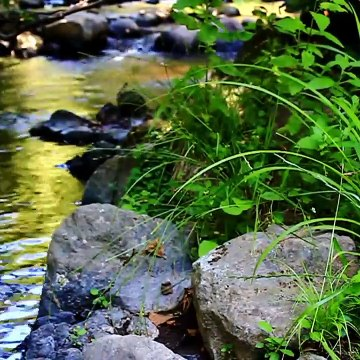 Relaxing River Water Flowing in greenery without music and sound