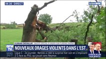 Ce chêne centenaire n'a pas résisté aux orages dans le Rhône