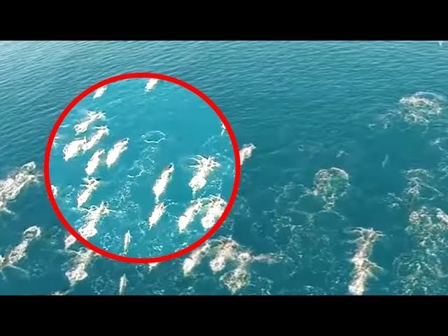 5 Real Life Mermaids Caught On Camera