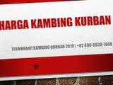 PROMO!! +62 822-2647-4434 Harga kambing Kurban