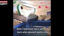 Guillaume Canet : l'acteur alerte sur les conditions d'élevage intensif de poulet (vidéo)