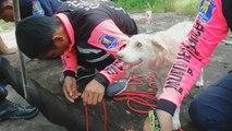 Hundemama vertraut menschlichen Helfern bei dramatischer Welpenrettung