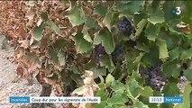 Aude : après inondations et sécheresse, les viticulteurs font le triste bilan des incendies