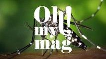 """CHOC : """"Le moustique est l'animal le plus dangereux de notre planète"""""""
