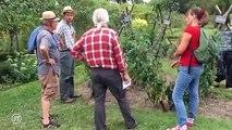 Gastronomie : Les tomates arrivent ... avec du retard