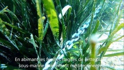 CAP D'AGDE  - Comment mouiller avec son bateau sans abîmer les herbiers de posidonies
