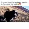 Cet homme a retrouvé deux chiots abandonnés et les a sauvés. Émouvant !