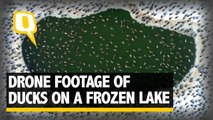 The Quint| Drone Footage of Ducks on a Frozen Lake Will Leave You Awestruck