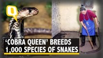 'Cobra Queen' in China Breeds 1,000 Species of Snakes