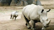 Rhino Rally Racing - Mom & Baby Rhino Sprint & Play