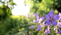 Une sauterelle rose découverte dans un jardin