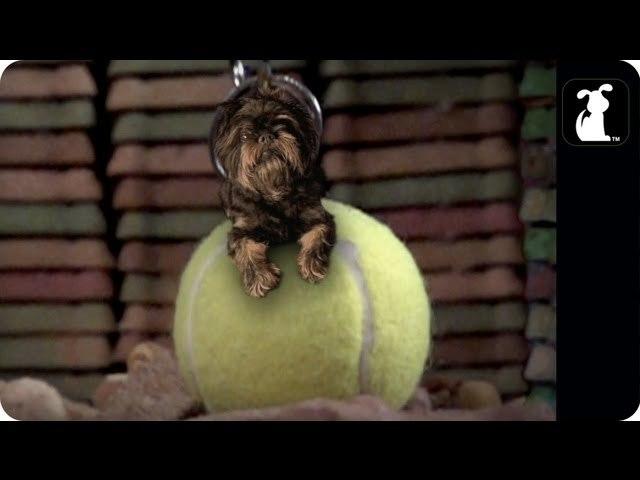 Miley Cyrus - Wrecking Ball Parody -