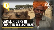 Why Rajasthan's Camel Breeders Are in a Crisis