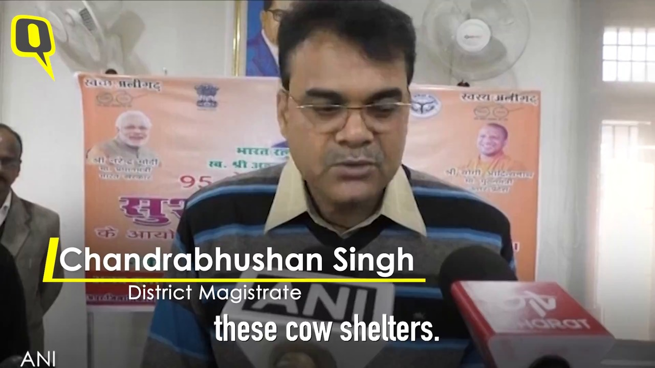 'Frustrated' Farmers Lock Stray Cattle in Schools, Health Centres