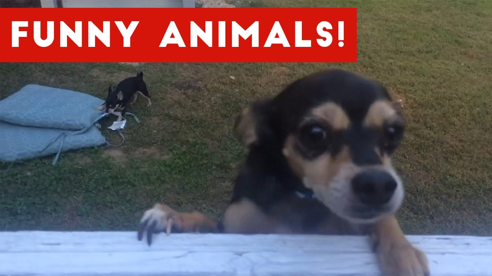 Funniest Pet Clips, Bloopers - Moments Caught On Tape 2017 - Funny Pet Videos