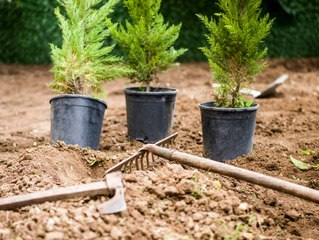 One Of the Solutions Against Climate Change? Planting Trees