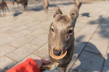 Plastic Killed Nine Deers in Japanese Sanctuary