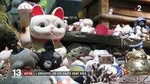 Japon : l'archipel où les chats sont rois