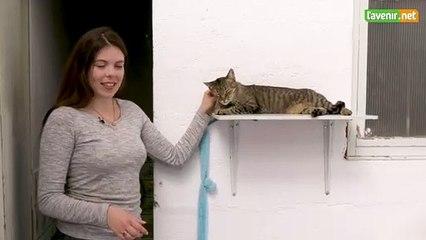 L'Avenir - Croix bleue : chat à adopter