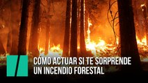 Cómo actuar si te sorprende un incendio forestal