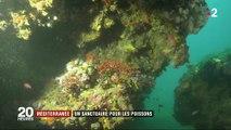 Mer méditerranée : un sanctuaire pour les poissons