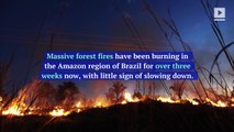 Amazon Rainforest Ravaged by Deforestation Fires in Brazil