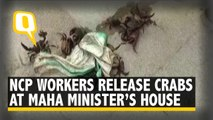 NCP Workers Throw Crabs Outside Maharashtra Minister Tanaji Sawant's House