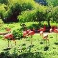 Admirez ces flamants roses prenant un bain de soleil à Paris !