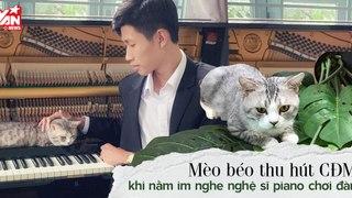 Chú mèo triệu view Haburu - Thích ngủ và thưởng thức tiếng đàn piano