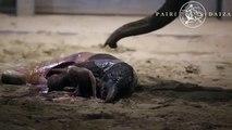 Regardez la naissance d'un bébé éléphant la nuit dernière- Vidéo émouvante!