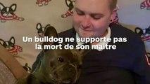 Un bulldog malheureux meurt 15 minutes après son maitre, décédé d'un cancer !