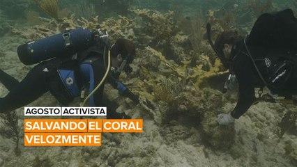Agosto activista: Salvando el coral velozmente