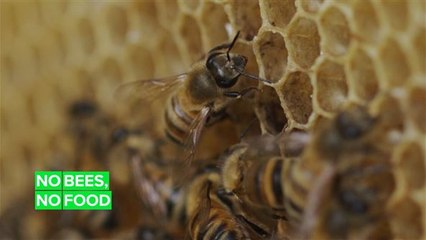 Half a billion bees dropped dead in Brazil and here's why