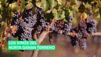 Cambio climático: Los vinos del norte ganan terreno