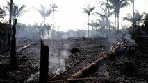 Les incendies de forêts au Brésil en hausse de 83% depuis début 2019
