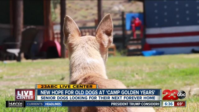 New Hope for Old Dogs at 'Camp Golden Years'