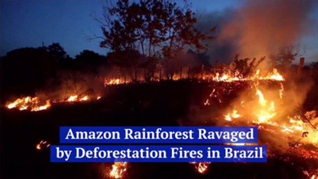 The Amazon Rain Forest Is On Fire