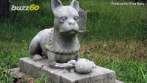 Chinese Biotech Firm Wants to Clone Your Cat