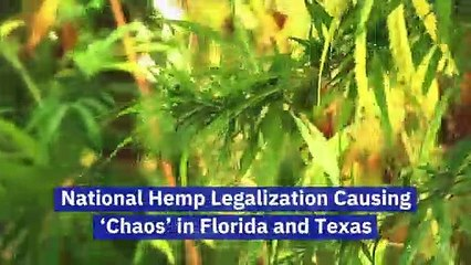 National Hemp Legalization Causing 'Chaos' in Florida and Texas