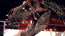 This One Change On Earth Helped In Giving Rise To Dinosaurs: Study