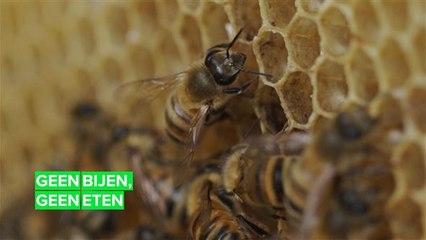 Bijen sterven in Brazilië