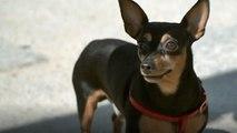 Conoce a Ringo, el perro de Ramoncín