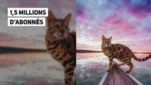 Les chats devenus les vedettes du web